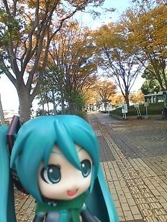 秋の散歩道。