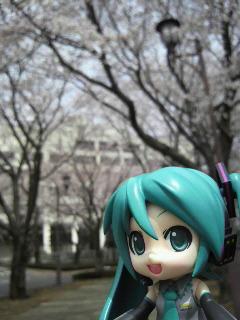 桜並木道。