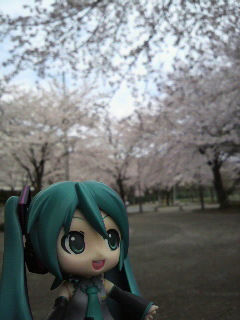 桜の広場。