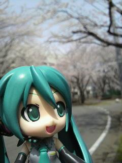 桜を見に来ました。