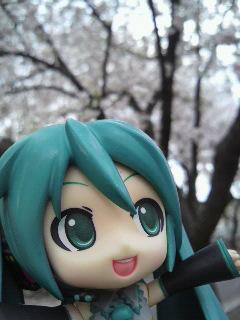 桜並木です。