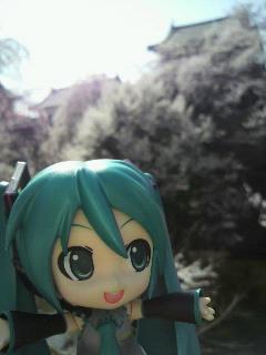 上田城千本桜。