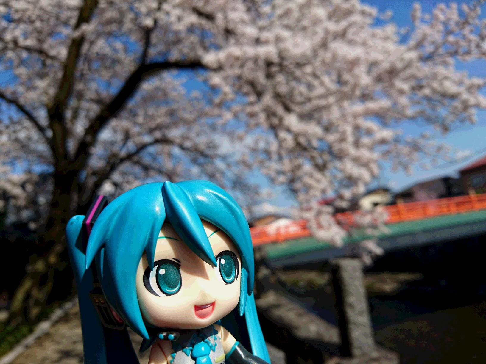 飛騨古川の桜。