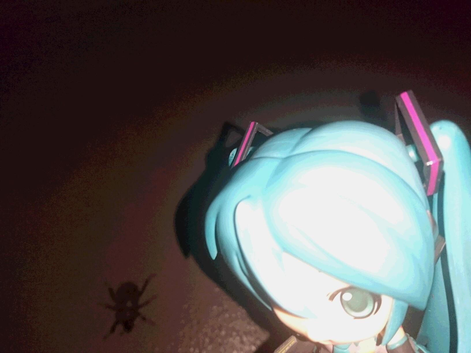 カブトムシの雌。
