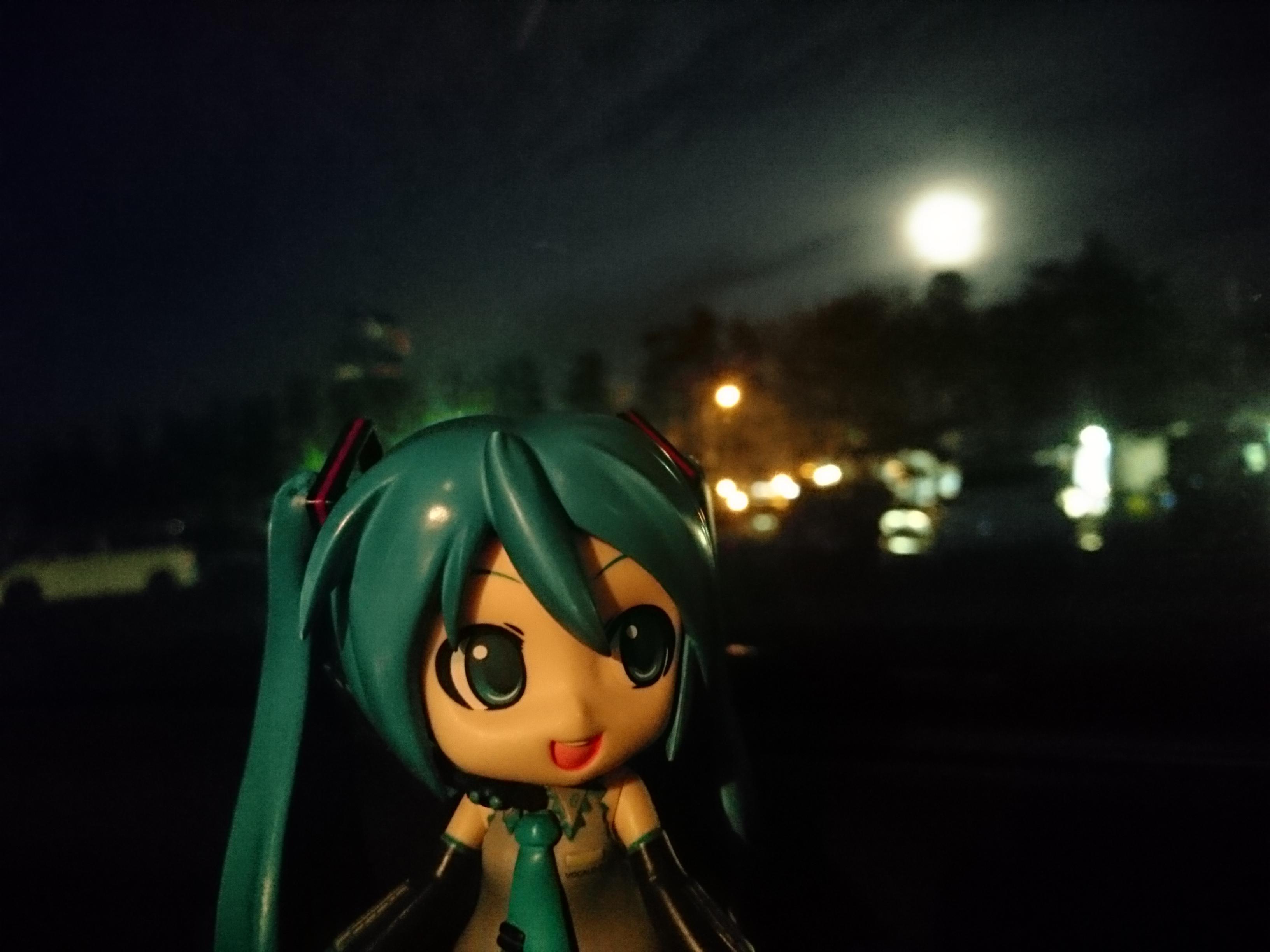 月明かりチョビたん大洗。